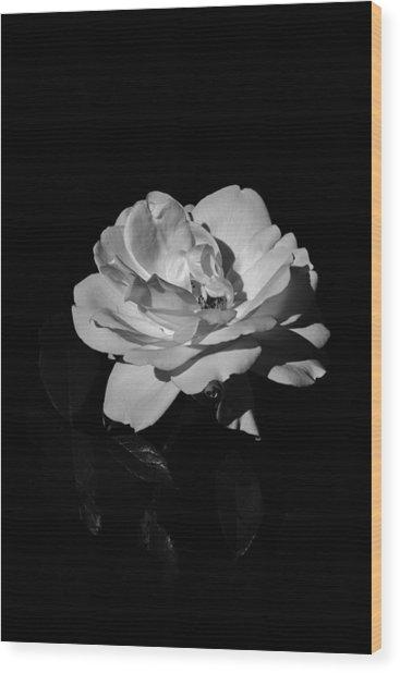 Iceberg Rose Wood Print by Charles Lupica
