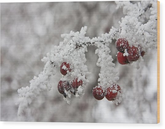 Iced Hawthorn Wood Print