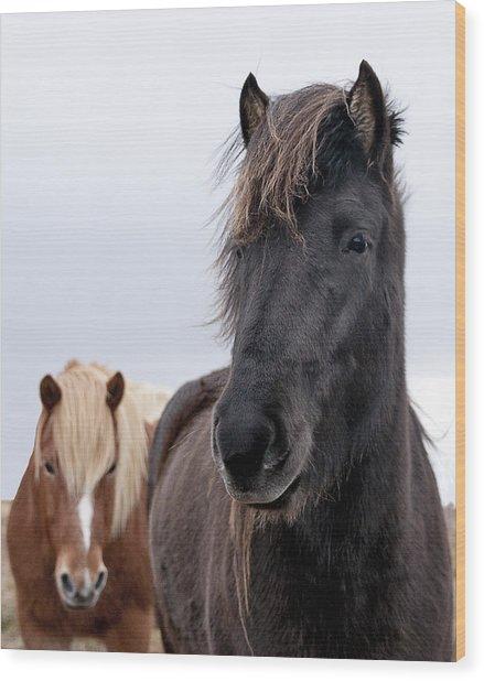 Iceland Horses Wood Print