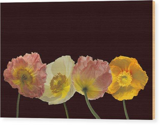 Iceland Poppies On Black Wood Print