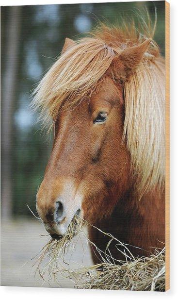 Icelandic Horse Wood Print by Bildagentur-online/mcphoto-schulz