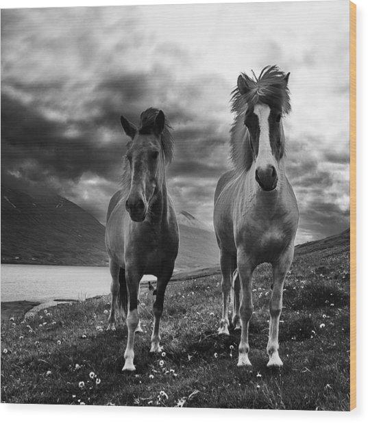 Icelandic Horses Wood Print