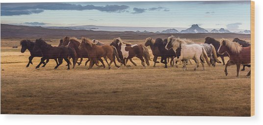 Icelandic Horses Galloping Over The Wood Print by Coolbiere Photograph