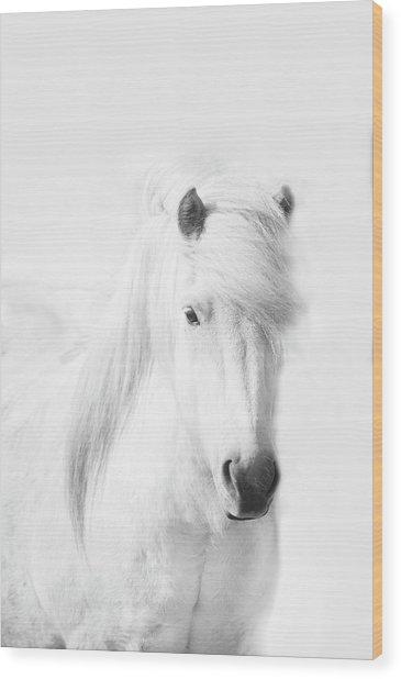 Icelandic Pony In White Wood Print