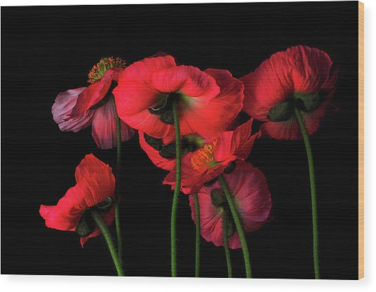 Icelandic Poppies - The View From Down Wood Print