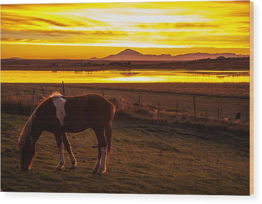 Icelandic Sunrise Wood Print