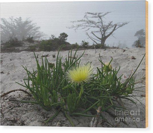 Iceplant Bloom On Carmel Dunes Wood Print