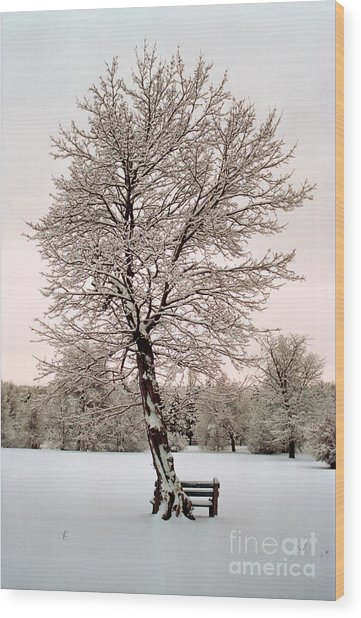 Icetree Wood Print