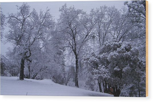 Icy Trees Wood Print