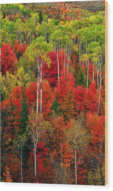 Idaho Autumn Wood Print
