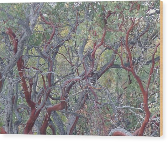 Idyllwild Red Tree Wood Print