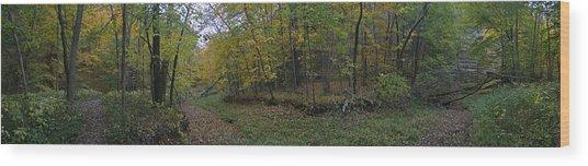 Illinois Canyon Wood Print by Gary Lobdell