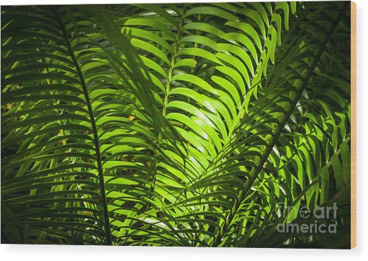 Illuminated Jungle Fern Wood Print