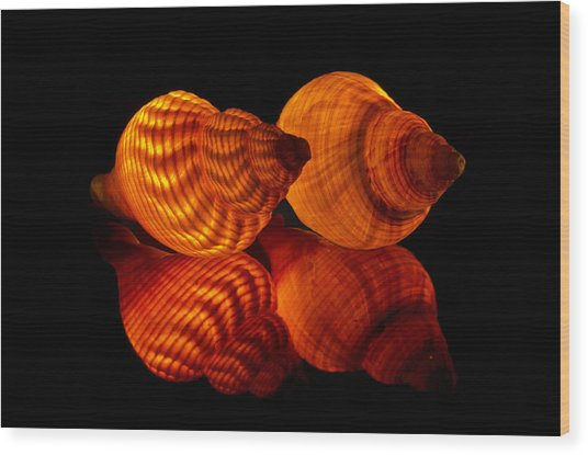 Illuminated Shells Wood Print