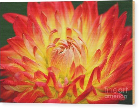 Img 0023 Flor En Rojo Detalle Wood Print