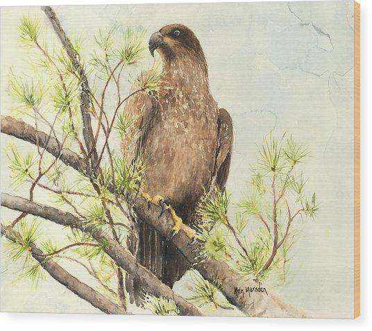 Immature Eagle Wood Print