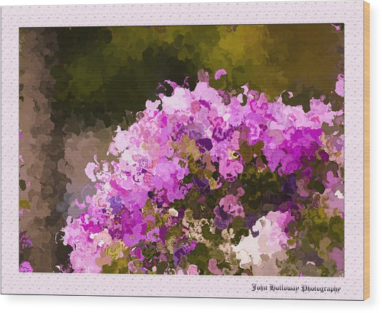 Impatiens In Oil Wood Print by John Holloway