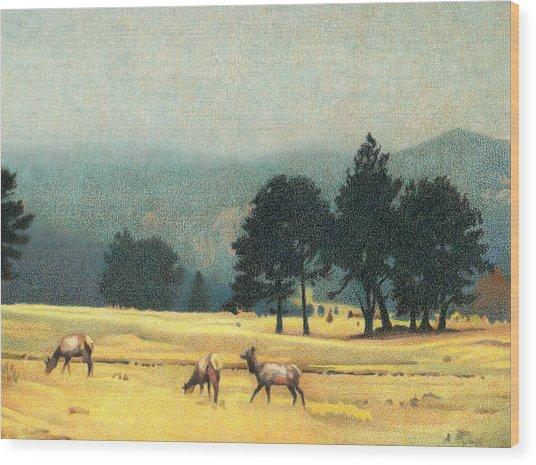 Impression Evergreen Colorado Wood Print
