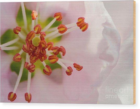 In A Pink Cloud Wood Print