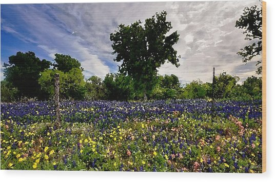 In Full Bloom Wood Print by Cole Black