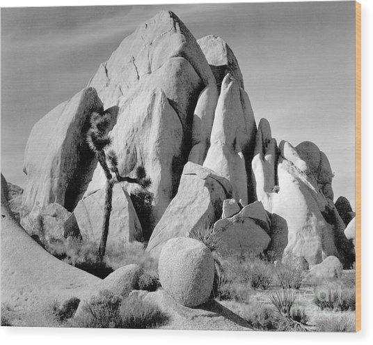 In Joshua Tree National Monument 1942 Wood Print by Ansel Adams