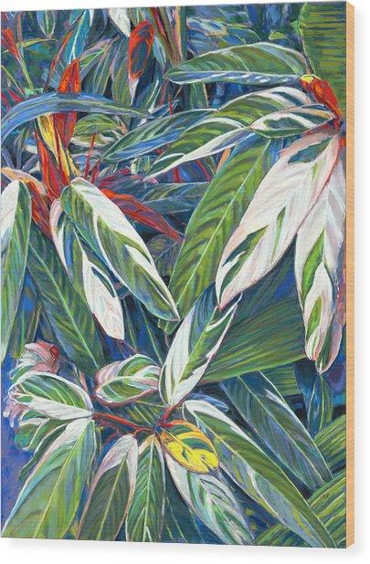 Stromanthe Sanguinea Wood Print