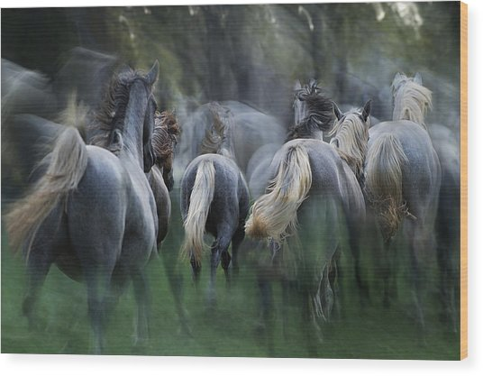 In The Gallop Wood Print by Milan Malovrh