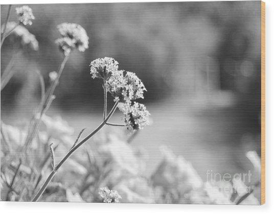 In The Meadow Wood Print by Barbara Bardzik