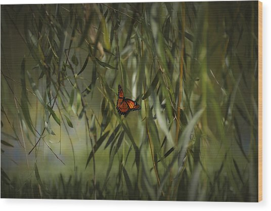 in the memory of Papillon Wood Print