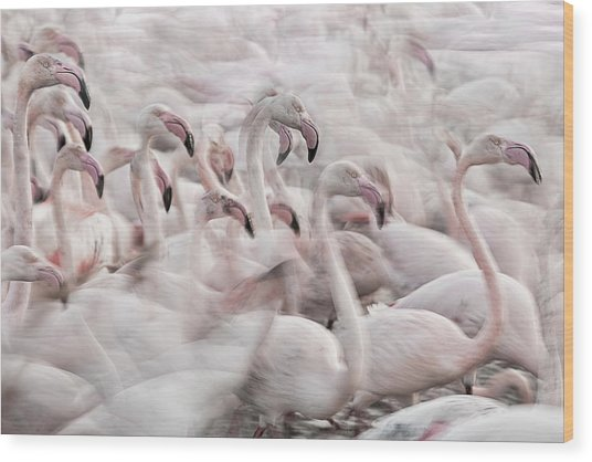 In The Pink Transhumance Wood Print