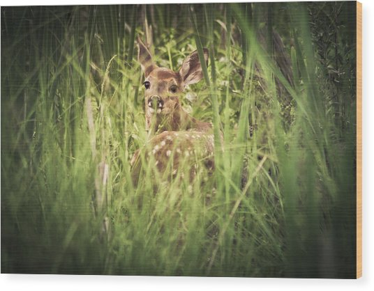 In The Tall Grass Wood Print