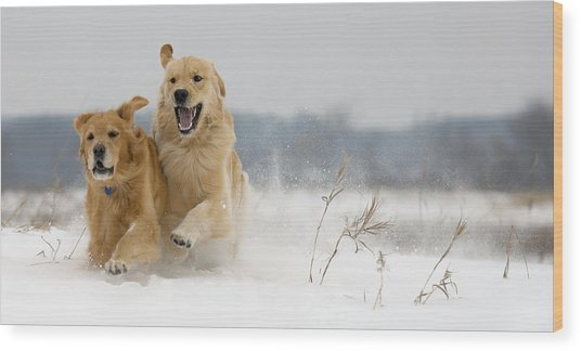 In Their Element Wood Print