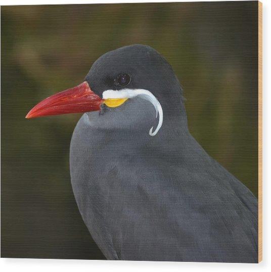 Inca Tern  Wood Print