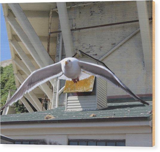 Incoming Seagull Wood Print