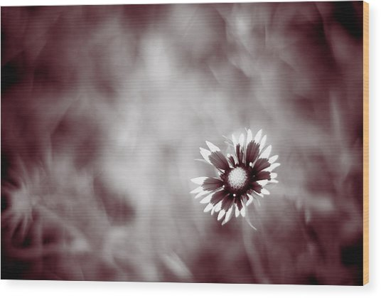 Indian Blanket Flower Wood Print