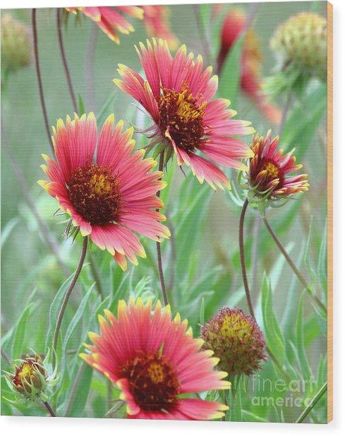Indian Blanket Wildflowers Wood Print