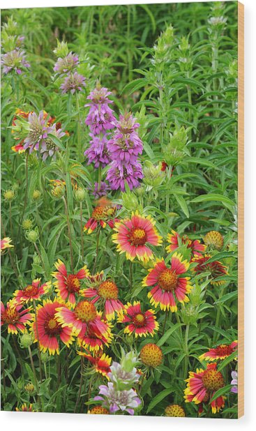 Indian Blankets And Lemon Horsemint Wood Print