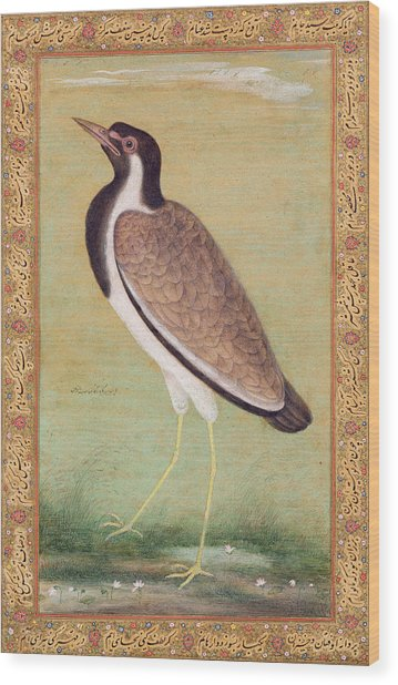 Indian Lapwing Wood Print