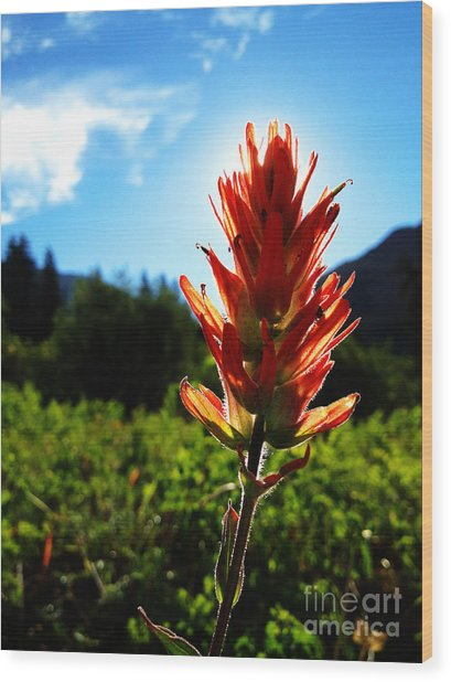 Indian Paintbrush Sunrise Wood Print