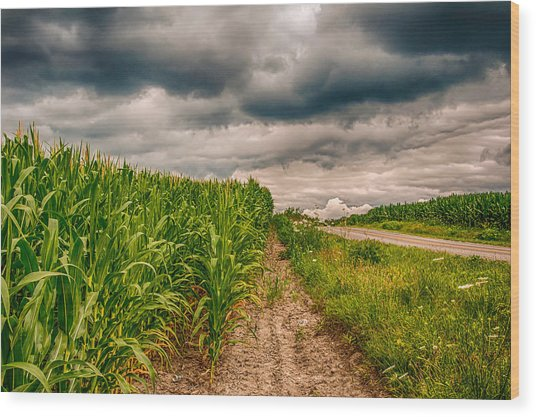Indiana - Corn Country Wood Print