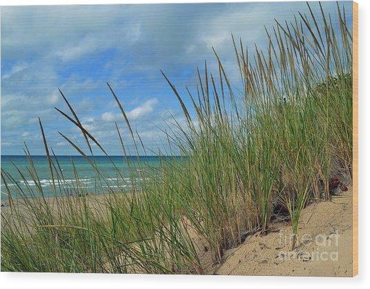 Indiana Dunes Sea Oats Wood Print