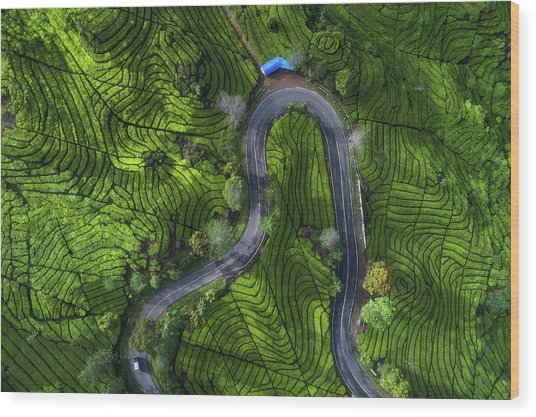 Indonesia - Rancabali Tea Aerial Wood Print