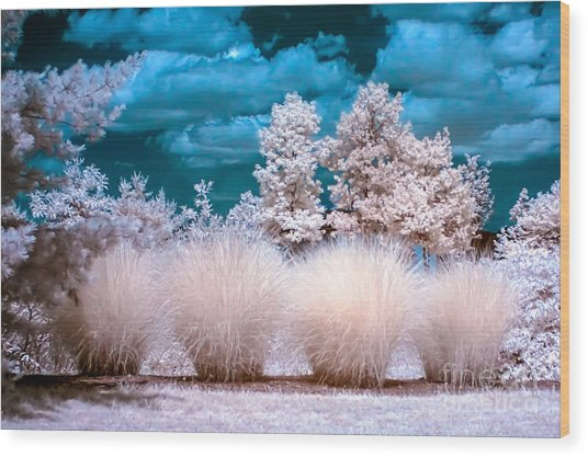 Infrared Bushes Wood Print