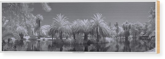 Infrared On A Sunny Afternoon Wood Print