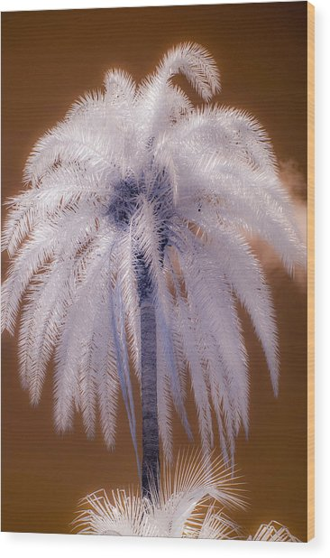 Infrared Palm Tree Wood Print