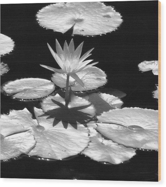 Infrared - Water Lily 02 Wood Print