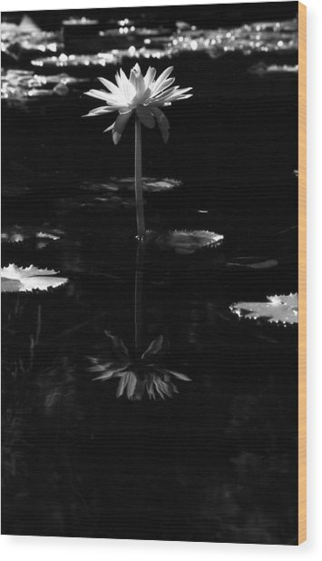 Infrared - Water Lily 03 Wood Print