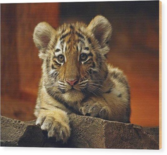 Inquisitive Cub Wood Print