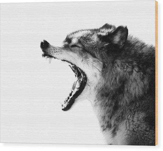 Intense Gray Wolf Portrait  Wood Print