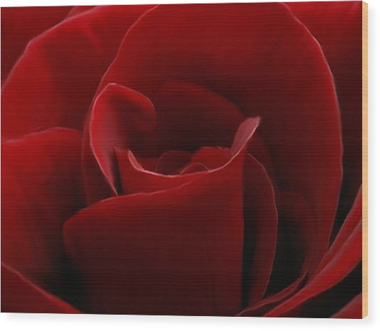 Intimate With A Red Rose Wood Print